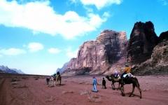 camels 2 days